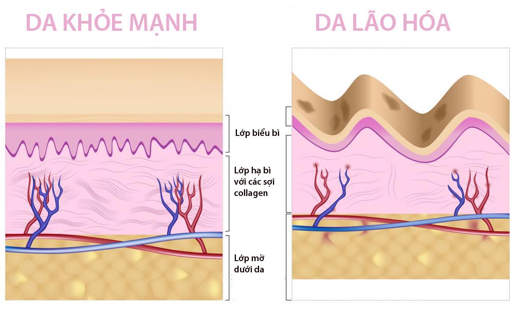 Collagen có ở khắp cơ thể người, không chỉ dành cho da