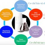 Thực phẩm chống lão hóa ageLOC Youth/Y-Span
